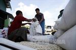 Lào sẽ xuất khẩu 400.000 tấn gạo trong năm 2017