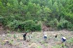 Phú Thọ phát triển rừng ở các huyện miền núi