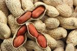 Tạm ngừng nhập khẩu một số loại nông sản từ Ấn Độ vì có mọt