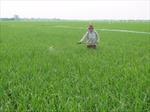 Đất nông nghiệp hàng nghìn tỷ đồng chưa được vốn hóa