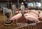 Thưởng thức bò BBB tại Tuần lễ giới thiệu sản phẩm chăn nuôi gia súc, gia cầm sản xuất theo chuỗi