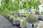 Phát triển nông nghiệp công nghệ cao trên vùng đất thép
