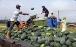 Tìm đầu ra cho nông sản, phải cải thiện được chất lượng sản phẩm