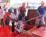 Quảng Nam: Tổ đội đoàn kết giúp ngư dân bám biển dài ngày