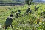 Chính phủ ban hành Kế hoạch hành động vì sự phát triển bền vững