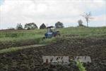 Sử dụng đất ở các nông, lâm trường còn lãng phí, kém hiệu quả