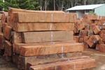 Vận chuyển trái phép gỗ giáng hương Tây Phi