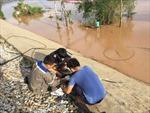 FPT khắc phục sự cố đứt cáp internet Bắc - Nam do bão số 10