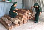 Nhập khẩu gỗ hương nhưng khai báo gỗ gõ bông lau xẻ hộp
