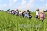 Đầu tư vào nông nghiệp sẽ được hưởng nhiều ưu đãi thuế