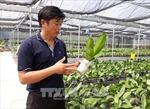 Mở hướng trồng hoa lan công nghệ cao vào Ninh Thuận