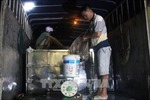 Tiêu hủy hơn 46.000 con cá trê giống nhập lậu