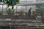 Nông nghiệp hữu cơ 'nảy mầm' tại Cuba