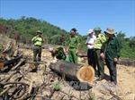 Sớm xét xử công khai vụ phá rừng tại An Lão, Bình Định