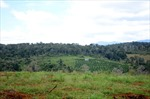 Rà soát lại đất tại các công ty nông, lâm nghiệp