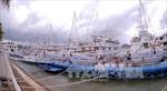 Cấm các phương tiện thủy neo đậu khu vực vùng đệm ven bờ vịnh Hạ Long