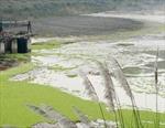 Vỡ cống tràn hồ xả thải Nhà máy Tuyển quặng Apatít, nhà ở, hoa màu 54 hộ dân bị ngập lụt