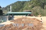 Nước thải nhà máy chế biến tinh bột sắn vượt quy chuẩn gấp nhiều lần
