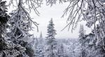Sống sót thần kỳ sau khi lạc trong rừng 5 ngày dưới cái lạnh -31 độ C