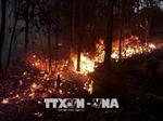 Cháy rừng thông tại Đông Triều: Phát hiện nhiều vỏ bao diêm gắn với hương vòng tại hiện trường