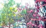 Mùa xuân bên cửa biển Tư Hiền