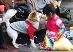 Những chú chó cảnh đáng yêu