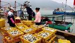 Ngư dân Hà Tĩnh trúng đậm 'lộc biển' đầu năm