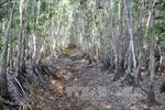 Đắk Lắk: Nguy cơ xảy cháy tại khu vực rừng chết khô sau bão