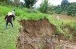 Xử lý vấn nạn 'cát tặc' ở hai tỉnh Bình Phước và Lâm Đồng