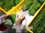 Xuất khẩu rau quả 5 tháng ước đạt 1,62 tỷ USD