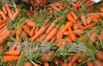 Thu giữ hơn 6 tấn cà rốt ngâm hóa chất