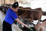 Vượt lên khuyết tật, người phụ nữ Thái làm giàu nhờ chăn nuôi, trồng trọt