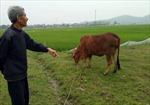 Thanh Hóa xác minh việc bắt người dân phải đóng phí đồng cỏ