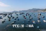 Khánh Hòa nỗ lực khắc phục 'thẻ vàng' thủy sản