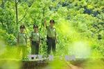 Kiểm lâm bám địa bàn giữ màu xanh cho rừng