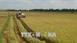 Điều chỉnh quy hoạch sử dụng đất 2 tỉnh Thừa Thiên - Huế và Trà Vinh