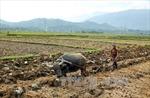 Băn khoăn khi sáp nhập một số khu dân cư ở vùng cao Văn Chấn