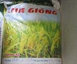 Tây Ninh truy cứu trách nhiệm việc cấp lúa giống kém chất lượng cho nông dân