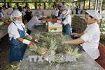 VPBank, IFC tài trợ 50 triệu USD để thu mua nông sản