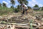 Mía đường trong nước lao đao vì đường nhập lậu giá rẻ