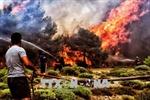 Các vụ cháy rừng gần Athens có thể là hành động phá hoại có chủ ý