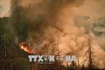 California ban bố tình trạng khẩn cấp do cháy rừng lan rộng