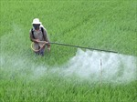 Việt Nam chi 700 triệu USD mỗi năm để nhập thuốc trừ cỏ từ Trung Quốc