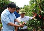 Sau 10 năm, thu nhập của nông dân tăng mạnh lên 32 triệu đồng/người