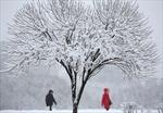 Tuyết rơi kỷ lục biến Moskva thành xứ sở cổ tích mùa Đông