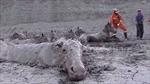 Xem giải cứu 18 con ngựa tuyệt vọng sa lầy trong bùn