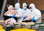 COVID-19 tới 6h sáng 12/7: Thế giới gần 577.000 ca tử vong, các bang Mỹ tăng kỷ lục ca nhiễm