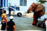 Bi kịch chú voi khát vọng tự do, chết dưới 87 phát đạn của cảnh sát