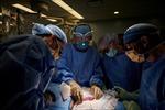 Lần đầu tiên ghép thận lợn cho người thành công, tin vui cho bệnh nhân thận