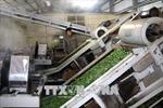Cơ hội xuất khẩu sản phẩmchè, cà phê sang thị trường Trung Quốc